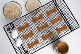 Tasty Nut Butter Dog Treats from Ezra Cohen Montreal